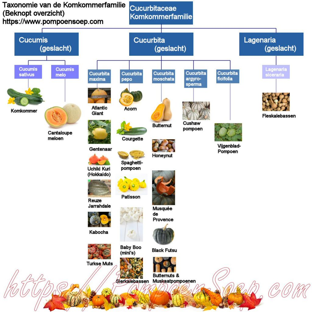 Infographic pompoensoorten taxonomie komkommerfamilie