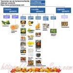 Infographic: pompoensoorten taxonomie komkommerfamilie
