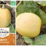 Melonnette Jaspée de Vendée