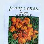 Jack-B-Quick Miniatuur pompoentje
